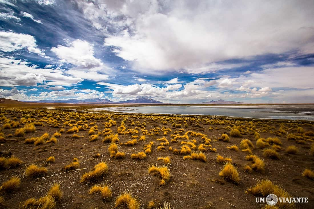 Salar de Tara, Atacama
