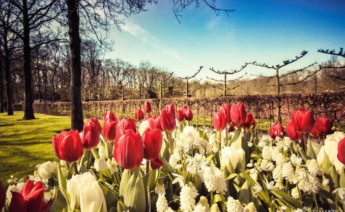 Keukenhof 2016: Como visitar o parque das tulipas da Holanda
