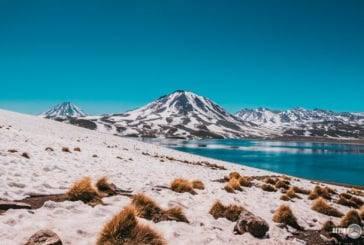 Lagunas Altiplânicas e Piedras Rojas: o passeio mais lindo do Atacama