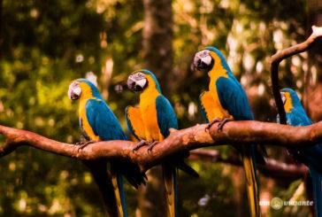 Parque das Aves, em Foz do Iguaçu: vale a pena visitar?