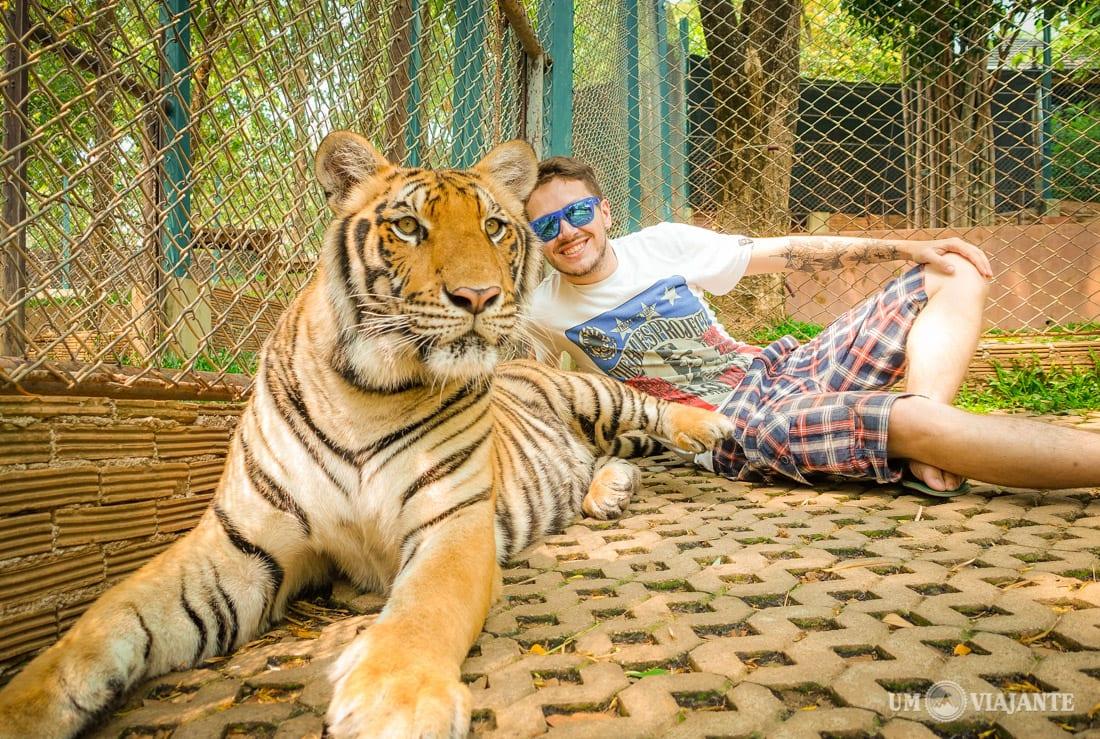 Tiger Kingdom, Chiang Mai - Templo dos Tigres