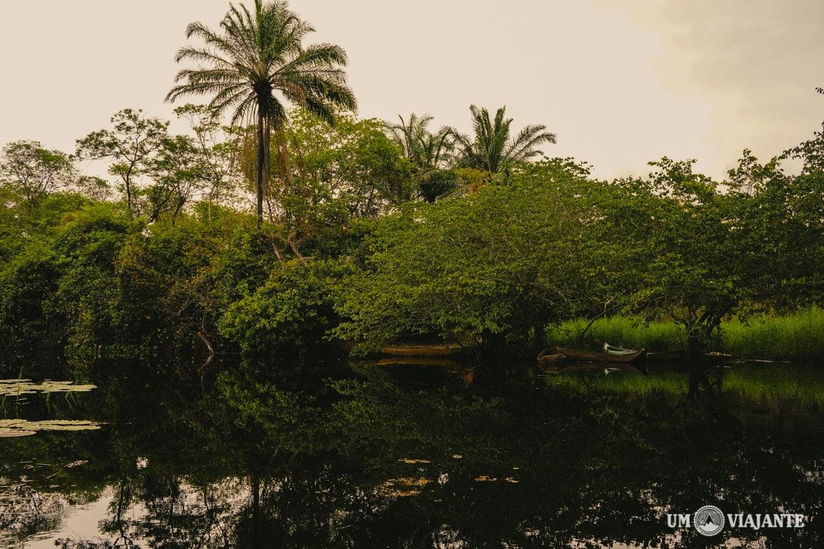 Marimbus, o mini Pantanal da Chapada Diamantina