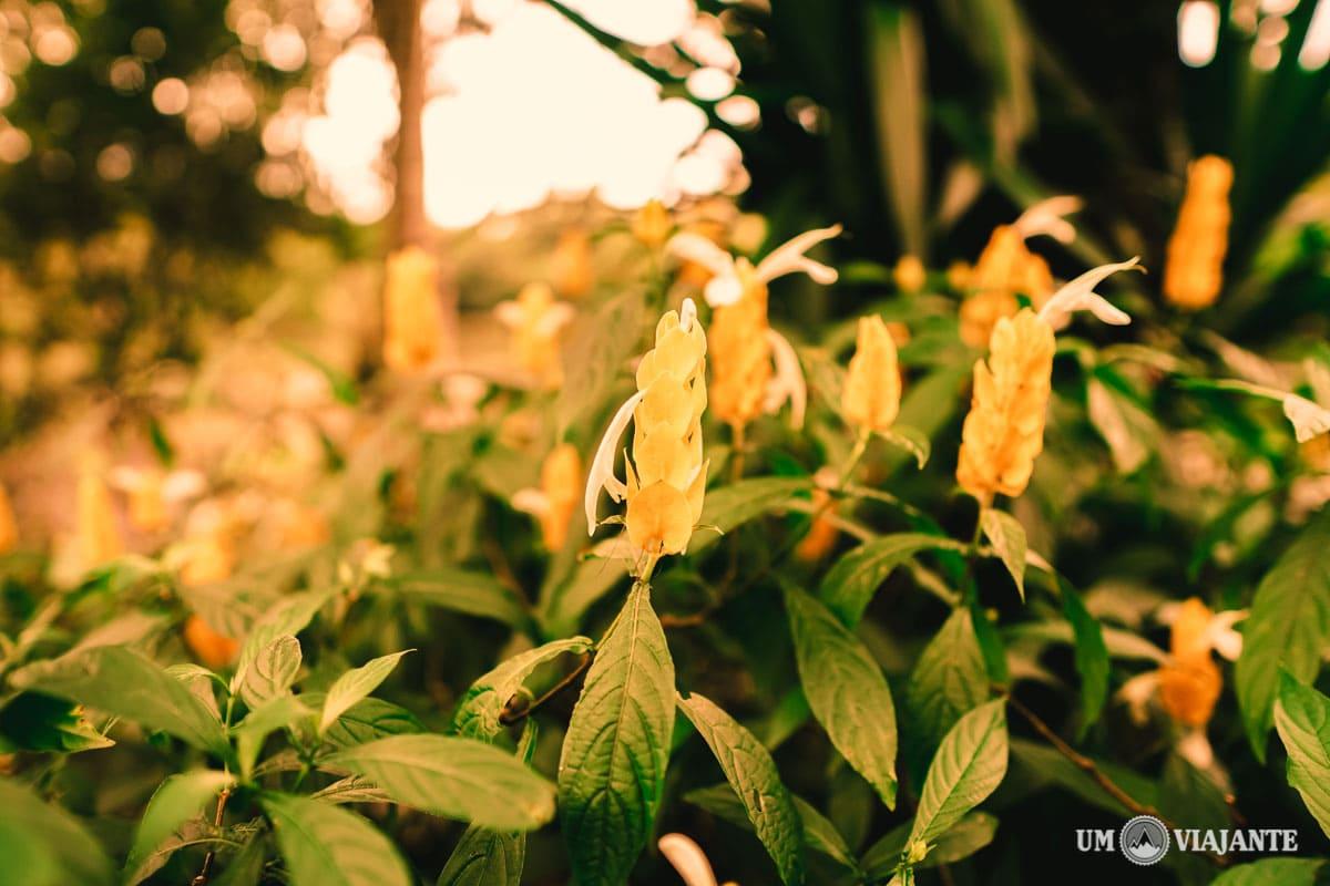 Estância Mimosa, Passeio em Bonito - MS