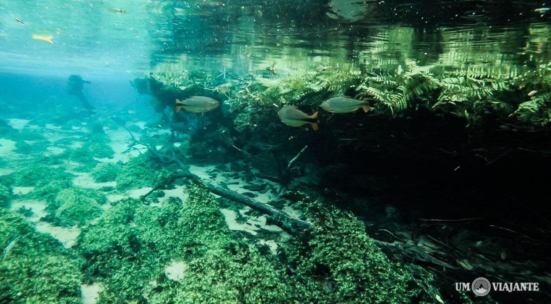 Flutuação do Rio da Prata   Bonito MS