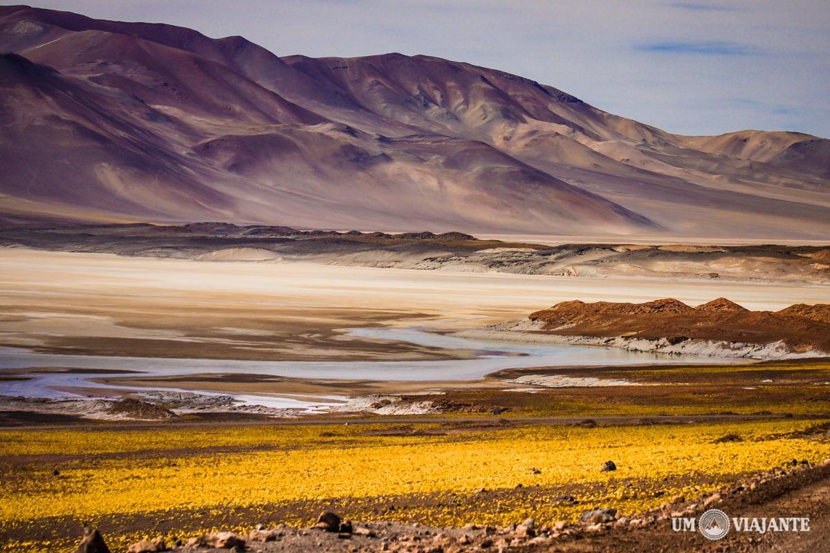 Deserto do Atacama, Um Viajante