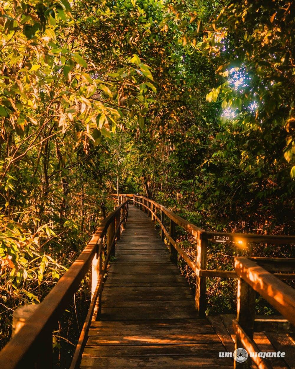 Passarelas do hotel Juma Lodge - Hotel de selva na Amazônia