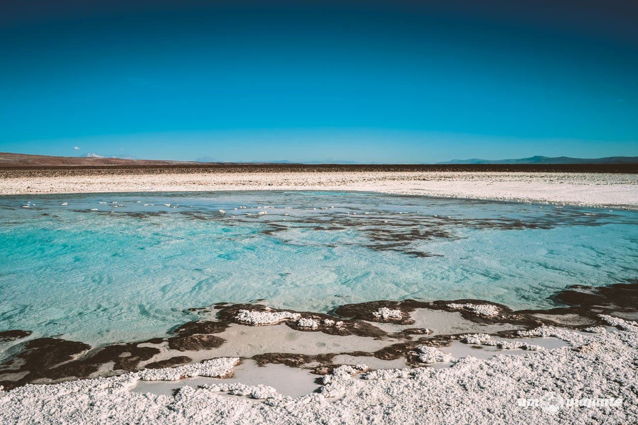 Lagunas Escondidas de Baltinache, no Deserto do Atacama   Foto: Robson Franzói @blogumviajante