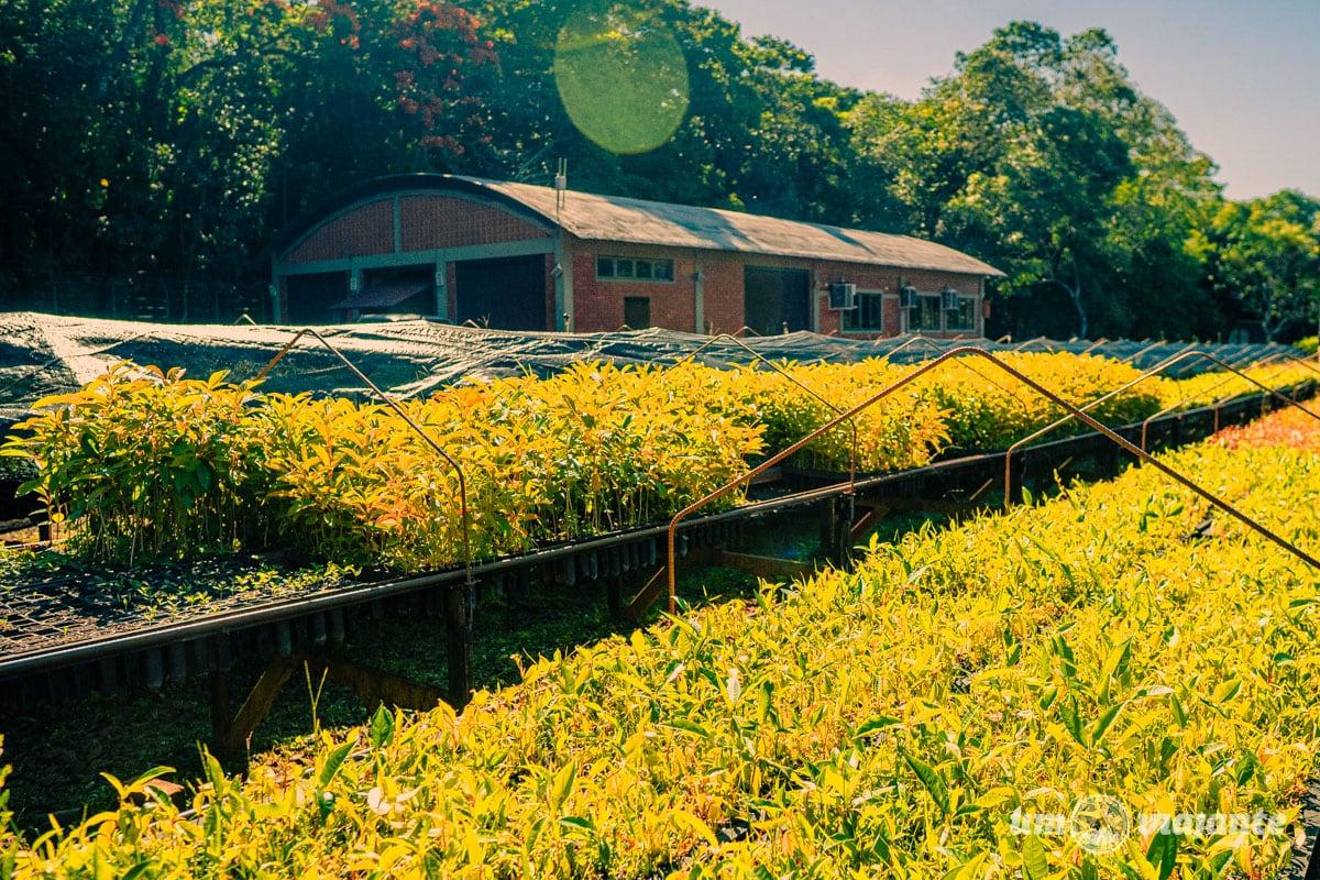 Refúgio Biológico Bela Vista na Itaipu