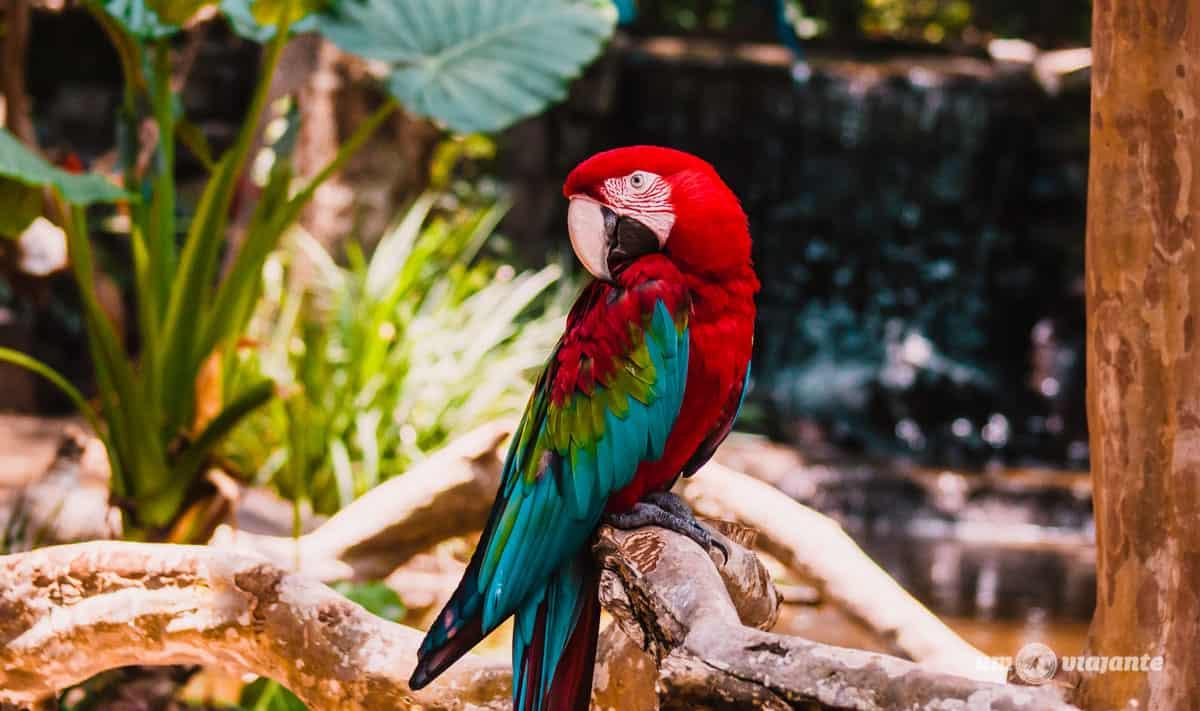 Parque das Aves - Roteiro Foz do Iguaçu